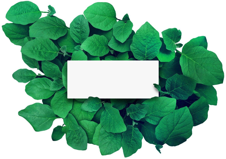 Green Mail Versand PostModern